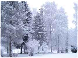 寒いフィンランドの冬